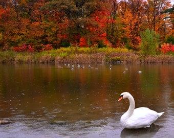 Autumn In Heaven