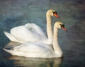 Swan  digital art image, Fine Art photography, nature, image download, Home decor, Printable Downloads, Instant Download, jpeg,