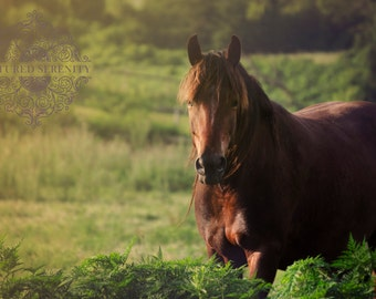 Strong stallion encapsulated by the sun's rays