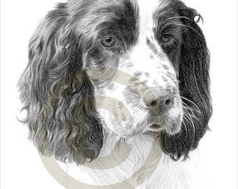 how to draw an english springer spaniel face