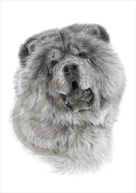 Matita di chow chow cane disegno opera di formato a4 for Disegni a matita di cani