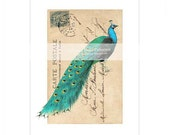 Peacock print, vintage, peacock illustration, vintage style, home decor, French postcard, Carte Postale, blue, green, A4 print