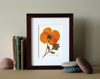 "Pressed flower print, 8"" x 10"" matted, Iceland Poppy, bright orange, small wall art, no. 017"