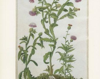 Oleander Flower Painting
