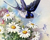 Swallows and Daisies Vintage Reproduction Downloadable, Printable, Digital Art Image Instant Download