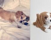 Custom Amigurumi Dog Crochet Puppy Stuffed Animal Plush Doll Doggie Decoration Ornament / Made to Order