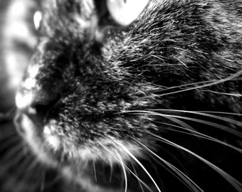Whiskers - Instant Digital Download / Printable - Fine Art Animal Photography / Black and White Cat