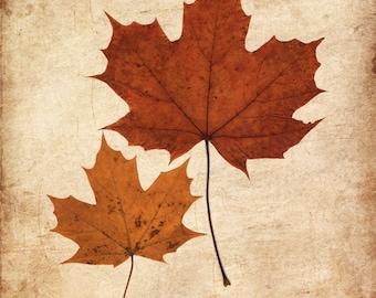 Maple leaves, autumnm leaves photo print, fall decor, rustic photo art, autumn fall leaves, shabby chic decor