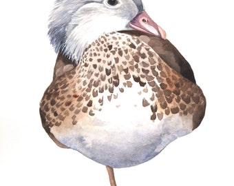 Duck Watercolor Painting ORIGINAL Watercolor painting. original watercolour painting duck