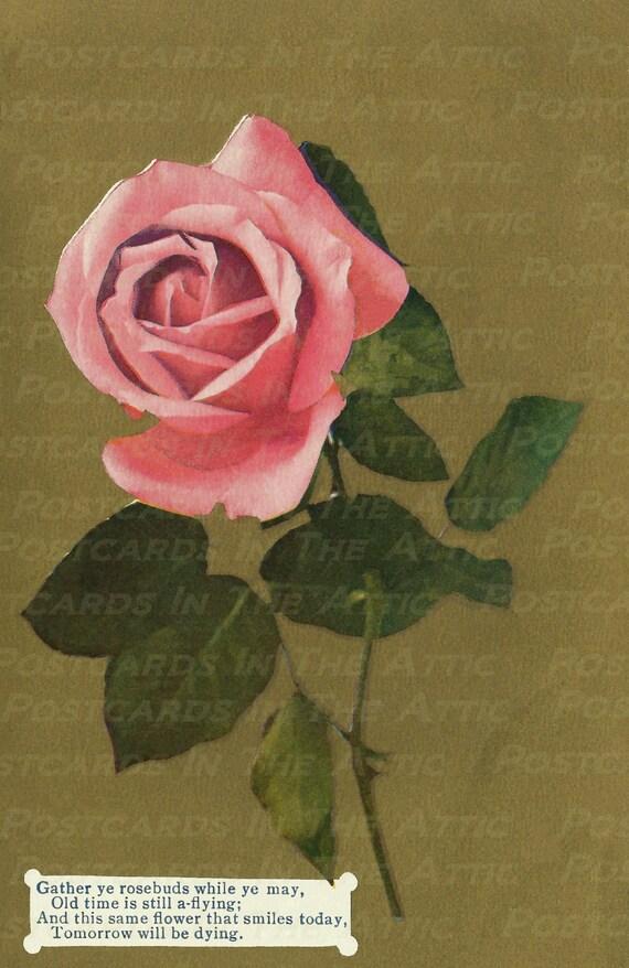 Beautiful Vintage Pink Rose on Gold Background 600 DPI Digital Hand Designed Art Scrapbooking, Card Making + Craft PRINTABLE DOWNLOAD