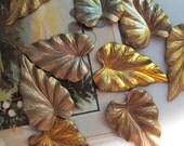 Vintage Pointed Caladiums Leaves