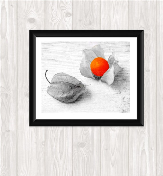 Print Your Own Fine Art Orange Caped Gooseberry Photo Fine Art Food Photography Kitchen Art Home Decor Wall Art  8x10 Chinese Lantern Autumn