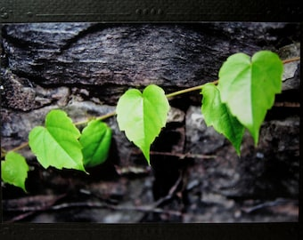 """Romantic Leaves Photo Card w/ Matching Black Envelope: """"Love in the Leaves"""""""