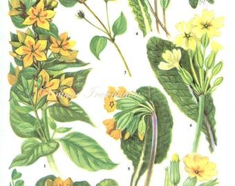 Vintage Botanical Print Antique FLOWERS, plant print botanical print, bookplate 27 art print, yellow plants plant wall