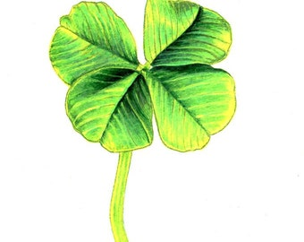 "Four Leaf Clover Print: Digital print of an original drawing available 5x7"" or 8x10"""