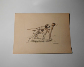Engraved dogs, signed by the engraver, vintage engraving