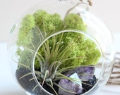 Air Plant Terrarium Kit and Amethyst Crystal Point with Black Sand - Small Hanging Terrarium
