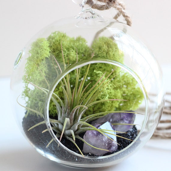 Air Plant + 2 Stone Terrarium Kit || Amethyst, Clear Quartz, Desert Rose, Geode, Pyrite, and Rose Quartz  || Small Round Hanging