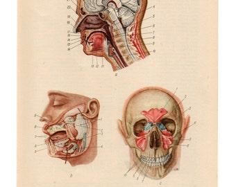 human body skull print anatomy medical anatomic anatomical upcycle recycle repurpose biology diagram