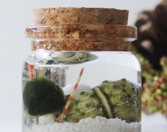 Urchin's Oasis Mini Aqua Terrarium - Marimo Ball, Japanese Moss Ball, Living Home Decor, Gift, Plant, Sea Fan, Sea Shells
