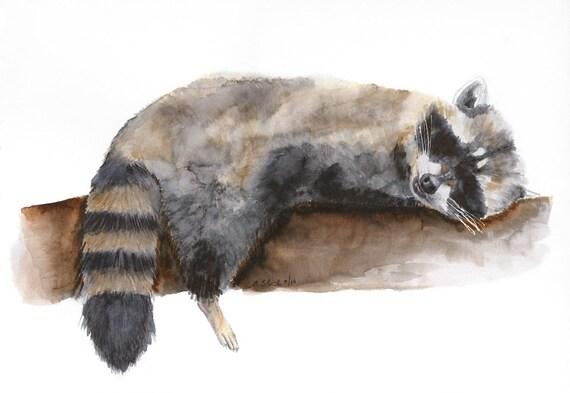Raccoon Art Woodland Nursery Baby Raccoon By Tinytoesdesign