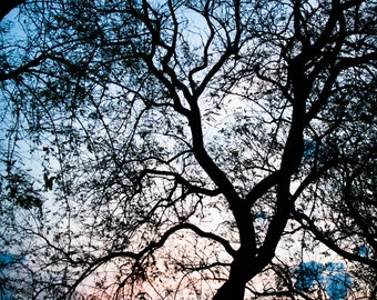 Backlit tree tree-decoration-Photography-Nature Photography-