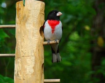 Wood bird feeder tubular style hanging bird seed feeder - ultimate finch feeder / grosbeak and cardinal feeder - bird feeder is all handmade