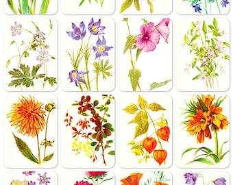 Flowers. Set of 16 Vintage Prints, Postcards - 1980s