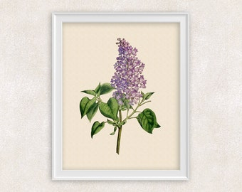 Lilac Botanical Art Print - Purple Flower Print - Garden Prints - 8x10 PRINT Illustration - Poster - Victorian Art - Item #159
