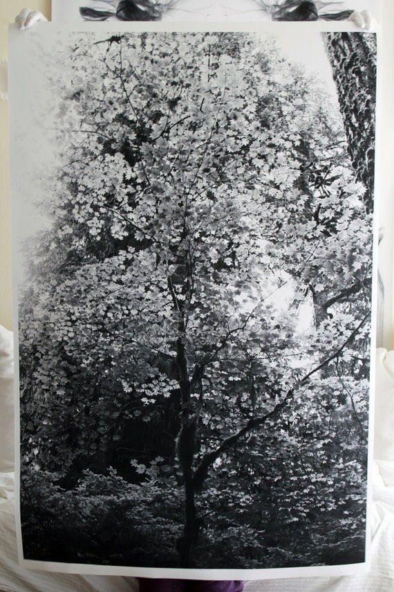 Large Tree in Black and White Poster Photography Print
