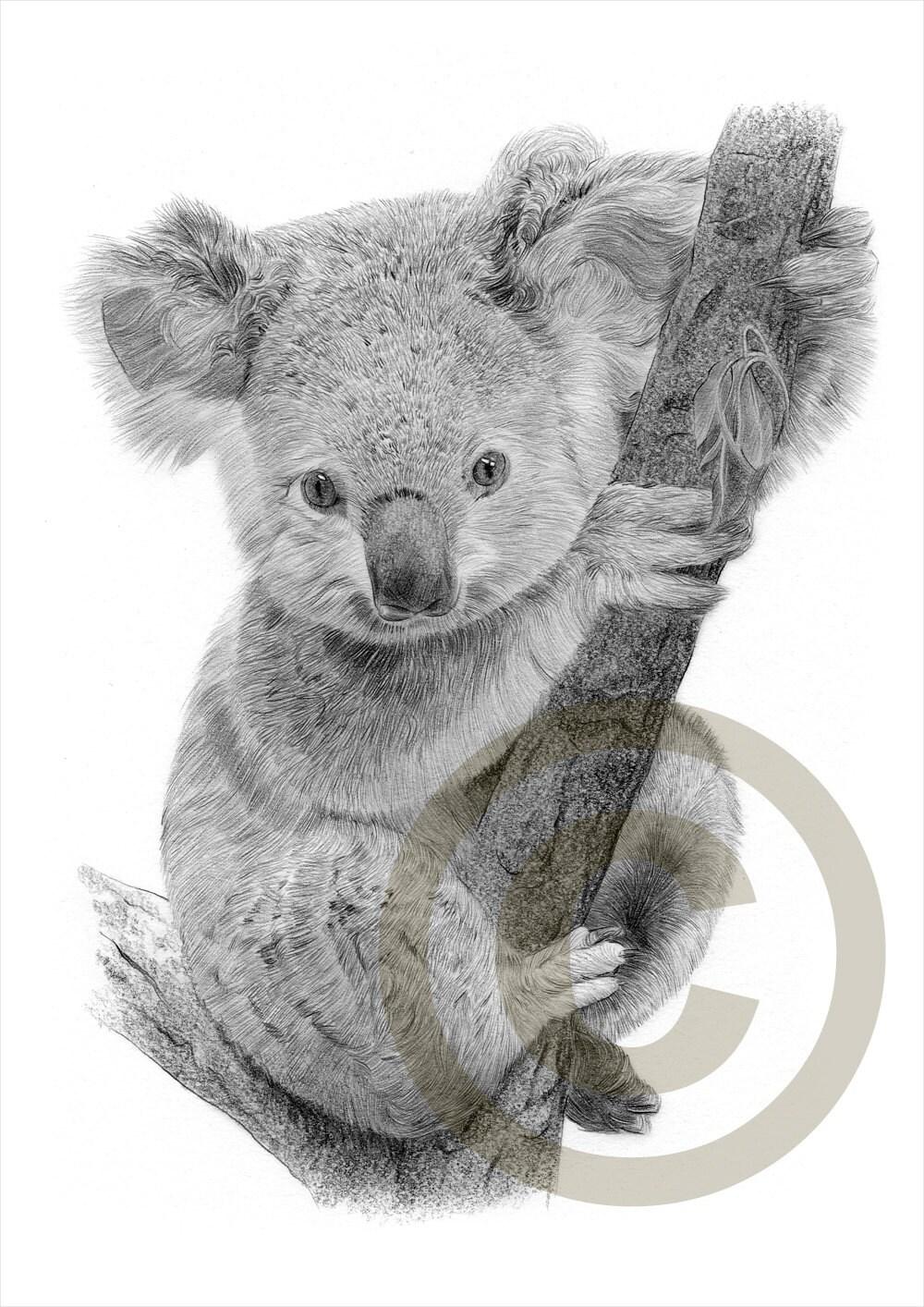 taille crayon koala