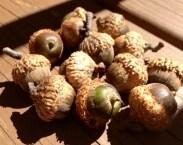 Acorns- 50 Acorns-Wedding-Rustic-Natural-Woodland-Thanksgiving Decoration-Crafts-Photo Prop