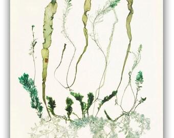 Seaweed art,MADE TO ORDER, seaweed pressings, Natural Sea fan collage, green seaweed pressing,  beach cottage decor, victorian algae art