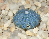mossy blue and green sea urchin bead flat 3 point hole style