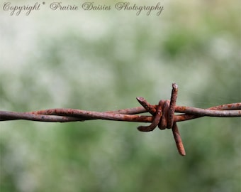 "Barbed wire photo, Farm, Ranch, Rustic, Rusty, 8x10, 11x14, 16x20, Wire, Metal, Bokeh, Cowboy, Western, ""Barbed Wire"""