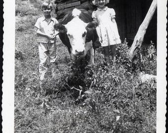 Vintage photo Snapshot Children with Pet Cow