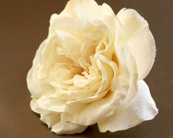 Large Cream Sophia Rose with Peach Accents - Artificial Flower, Silk Flower Heads - ITEM 042