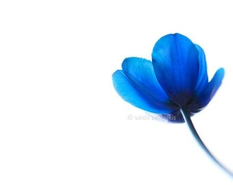 Blue wall art Perfect love 5x7 inches fine art photograph Blue tulip flower print Floral Valentine's gift for you beloved Floral wall decor