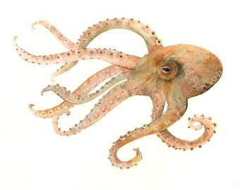 Octopus no. 2 small archival print of Watercolor painting