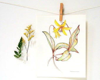 Flower Print - Trout Lily - 1989 Vintage Page 10 x 8