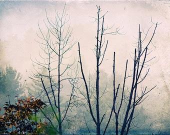 Foggy Landscape Photography, Misty Country Scene , Dreamy Woodland Decor, Rustic Decor