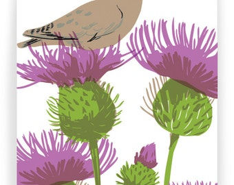 Dove in Thistles : Box of 8 A2 folding blank cards