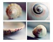 Beach Shell Photographs, Discounted Set of Four, Bathroom Decor, Seashell Photos, Beach Art, Blue Beach Photography, Shabby Cottage Decor