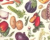 Italy Authentic Florentine Paper Mixed Vegetables Italian Paper Tassotti IP T615