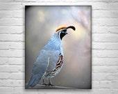 Quail Bird Picture, Bird Art, Bird Photography, Quail Art, Quail Print, Bird Art, Southwestern Birds, Bird Print, Quails in Art, Bird Prints