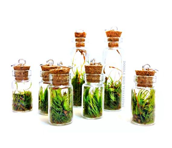 live moss mini terrarium pendant 1 necklace charm with. Black Bedroom Furniture Sets. Home Design Ideas