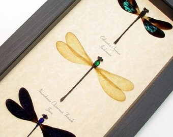 Mother's Day Gift Real Framed Set Of 3 Damselfly Shadowbox Display 8202