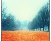 Landscape photography, wall decor, wall hanging, wall art, nature photograph square print, tall trees bold orange decor