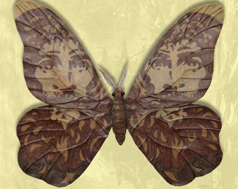 Ad Imagnem Christi Papilio, mixed-media moth sculpture