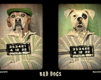 Bad Dogs, large original photograph of bad dog boxer brothers Bugsy and Mugsy Barker in vintage style mugshot